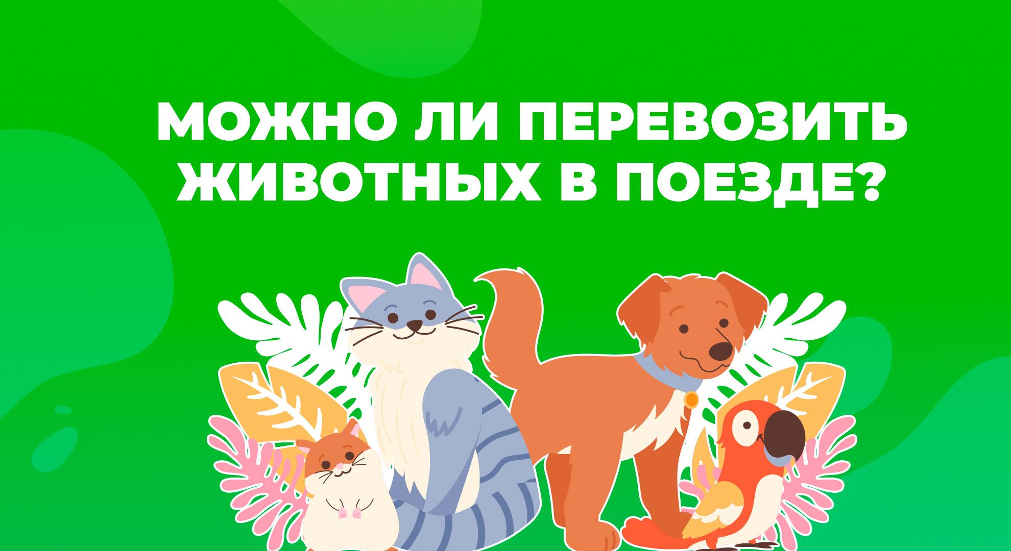 animals-train