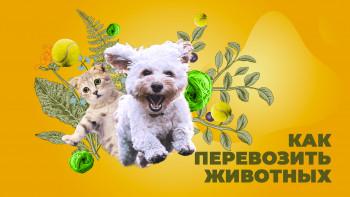 animals-min
